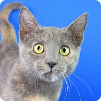 Adopt A Pet :: Pancake - Carencro, LA