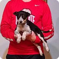 Adopt A Pet :: Jake - Lakewood, OH