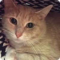 Adopt A Pet :: Petra - Toronto, ON