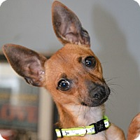 Adopt A Pet :: Boss - Lafayette, IN
