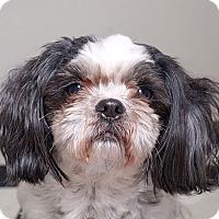 Adopt A Pet :: Bubbles - Sudbury, MA