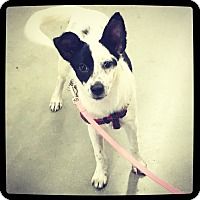 Adopt A Pet :: Ellie - Grand Bay, AL