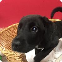 Adopt A Pet :: Tide - Decatur, AL
