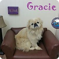 Adopt A Pet :: Gracie - Arcadia, FL
