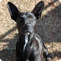 Adopt A Pet :: LOKI - Panama City, FL