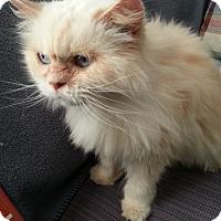 Adopt A Pet :: DONATELLA - Powder Springs, GA