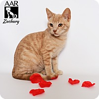 Adopt A Pet :: Zachary - Tomball, TX