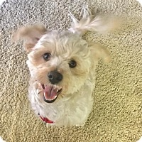 Adopt A Pet :: Maui - Huntington Beach, CA