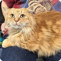 Adopt A Pet :: Punkin - Youngsville, NC