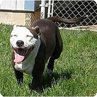 Adopt A Pet :: Empress - Meridian, ID