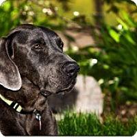 Adopt A Pet :: Charlie - Evans, CO