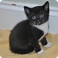 Adopt A Pet :: Oreo - New Smyrna Beach, FL