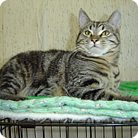 Adopt A Pet :: Larry - Grayslake, IL