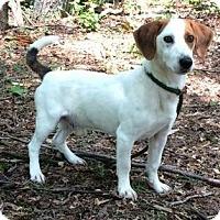 Adopt A Pet :: Ogden - Brattleboro, VT