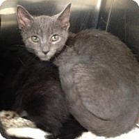 Adopt A Pet :: Skittles - East Brunswick, NJ