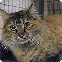 Adopt A Pet :: Ginger - Winchendon, MA