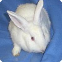 Adopt A Pet :: Herbie - Woburn, MA