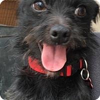 Adopt A Pet :: deisel - Sherman Oaks, CA