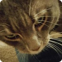 Adopt A Pet :: Cluster - Fort Collins, CO