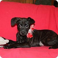 Adopt A Pet :: Jill - Harrisburg, PA