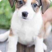 Adopt A Pet :: Raphael - Modesto, CA