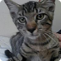 Adopt A Pet :: Fezzik - Trevose, PA
