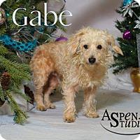 Adopt A Pet :: Gabe - Valparaiso, IN