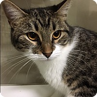 Adopt A Pet :: Tink - Oakdale, CA