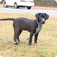Adopt A Pet :: Chomper - Oakdale, LA
