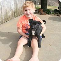Adopt A Pet :: Briley - Groton, MA
