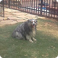 Adopt A Pet :: Paco - Lexington, TN