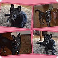 Adopt A Pet :: BERYL