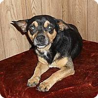 Adopt A Pet :: Sam - Chandlersville, OH