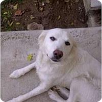 Adopt A Pet :: Fiona - Denver, CO