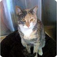 Adopt A Pet :: Calle - Secaucus, NJ