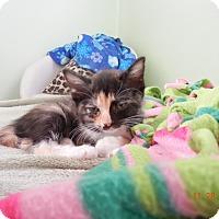Adopt A Pet :: Pippa - Southington, CT
