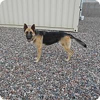 Adopt A Pet :: Anja von Altenberg - Phoenix, AZ