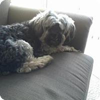 Adopt A Pet :: Stan - Orlando, FL