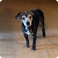 Adopt A Pet :: Onyx - Wilmington, MA