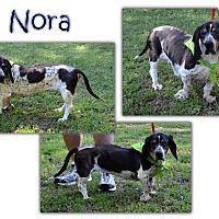Basset Hound Dog for adoption in Marietta, Georgia - Nora