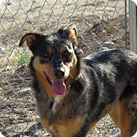 Adopt A Pet :: Fancy - Meridian, ID