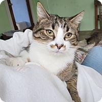 Adopt A Pet :: Nisha - Grand Chain, IL