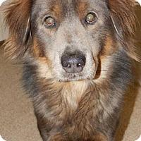 Adopt A Pet :: Hogan - Hartford, VT