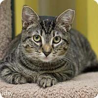 Adopt A Pet :: Sudsy - Merrifield, VA