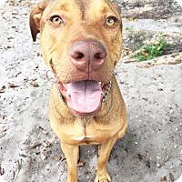 Adopt A Pet :: Bart - Boca Raton, FL