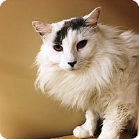 Adopt A Pet :: Miles - Riverside, CA