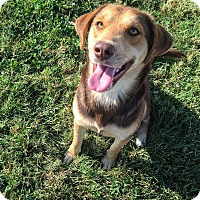 Adopt A Pet :: Shiloh - Russellville, KY