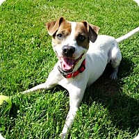 Adopt A Pet :: Rico - Belleville, MI