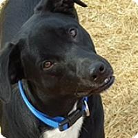 Adopt A Pet :: Rascal (ETAA) - Hagerstown, MD