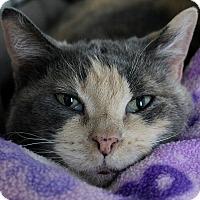 Adopt A Pet :: Clara - Portland, OR